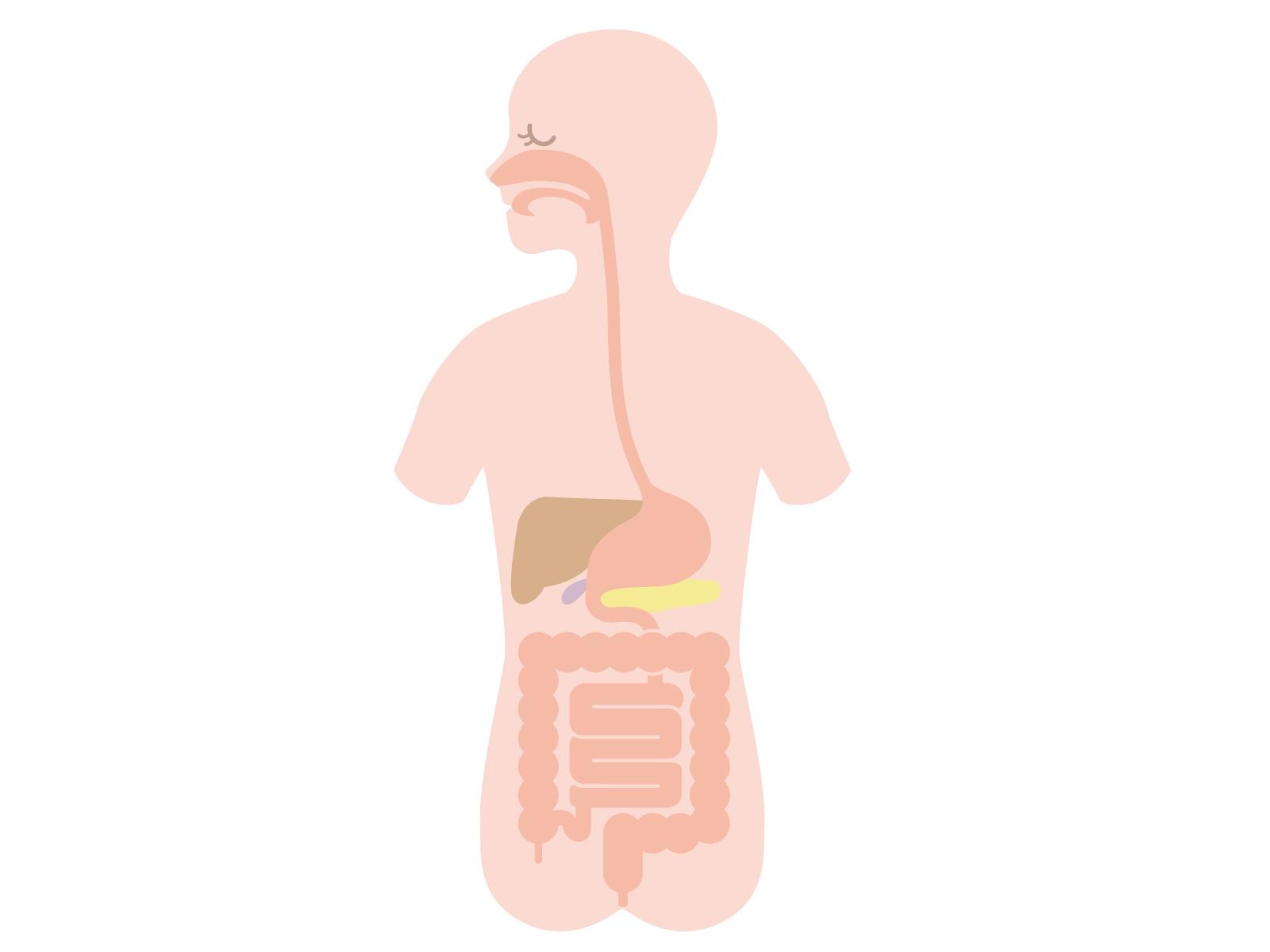 食道裂孔ヘルニアとは