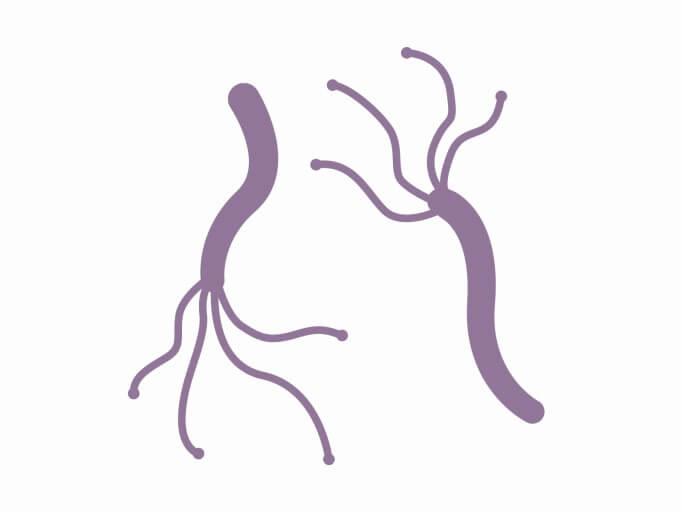 ピロリ菌について